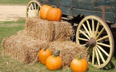7 Family-Friendly Fall Activities in Canton, TX